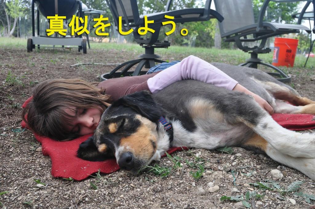 dog-338980_12801