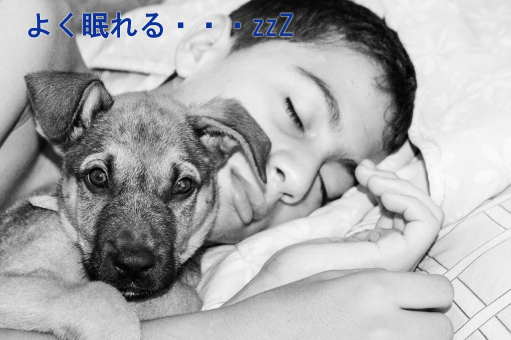 sleeping-670737_12801