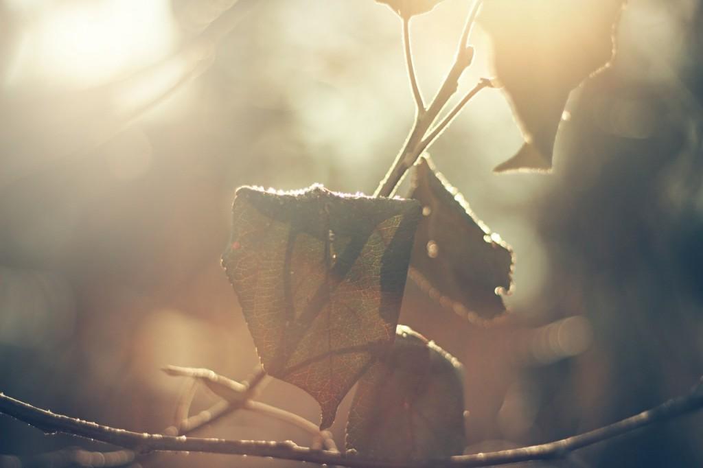 leaves-690890_1280