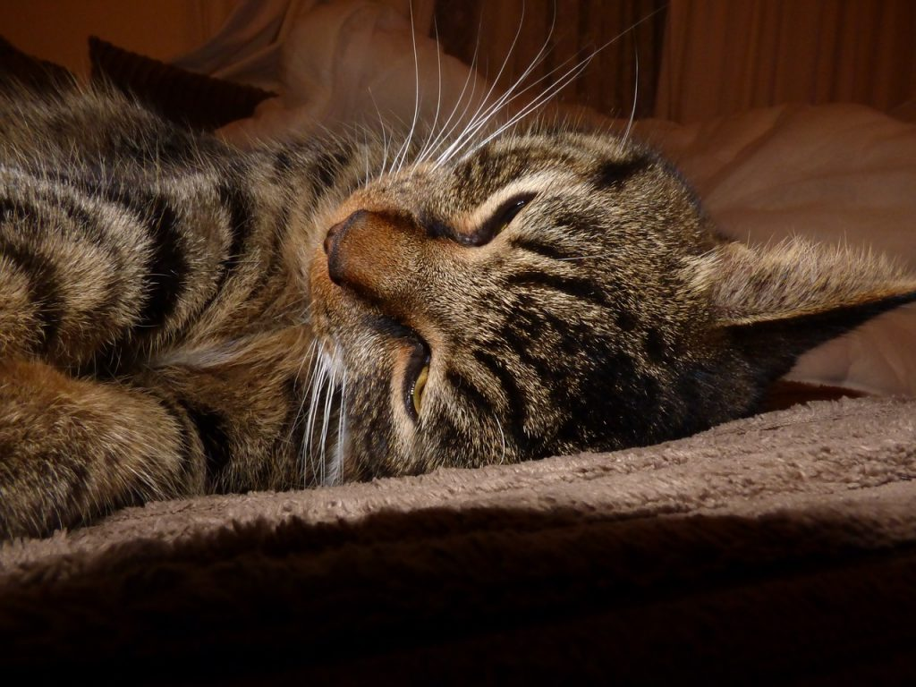cat-784570_1280
